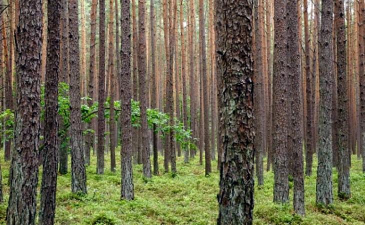 Holz ist ökologisch, energie- und umweltfreundlich
